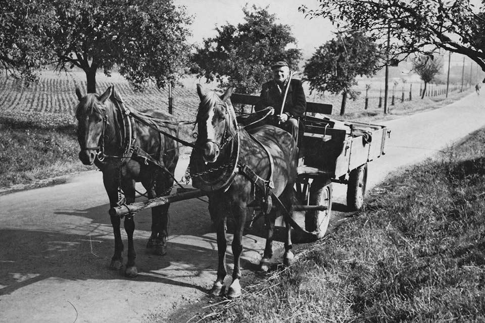 Landbouwmuseum-Dedemsvaart_CT_paard-wagen-historisch